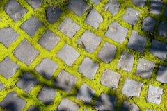 Tegelstenväg med mossa Arkivbilder