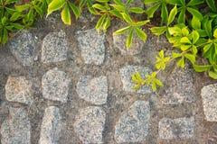 Tegelstenvägg eller staket med lösa druvor Filter Arkivbilder