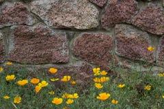 Tegelstenvägg, gulingblommor och bakgrund för grönt gräs Royaltyfri Fotografi