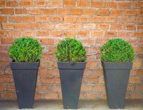 Tegelstenvägg i bakgrunden som dekoreras med växtvaser royaltyfria foton