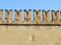 Tegelstenvägg i Venedig med seagullen Royaltyfria Bilder
