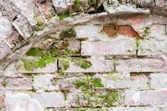 Tegelstenvägg med bågen och mossa Royaltyfria Bilder