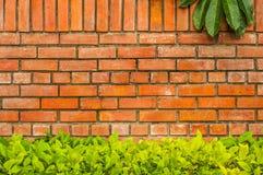 Tegelstenvägg med bladet Royaltyfri Fotografi
