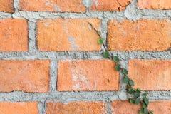 Tegelstenvägg med gräs Arkivbild