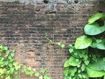 Tegelstenvägg med gräsplansidor i trädgården arkivfoto