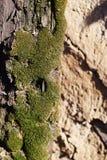 Tegelstenvägg med mossa Arkivfoto