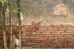 Tegelstenvägg och bambu Royaltyfri Fotografi