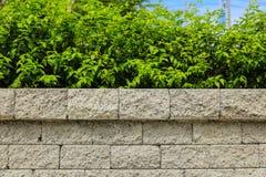 Tegelstenvägg och gräsplanblad arkivbild