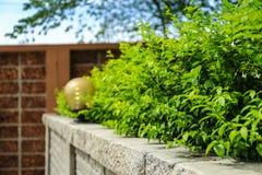 Tegelstenvägg och gräsplanblad arkivbilder