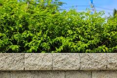 Tegelstenvägg och gräsplanblad royaltyfri bild