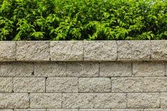 Tegelstenvägg och gräsplanblad royaltyfri fotografi