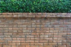 Tegelstenvägg och gräsplanblad Fotografering för Bildbyråer