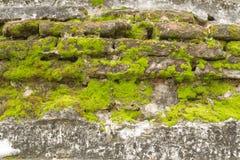 Tegelstenvägg och moss. Fotografering för Bildbyråer