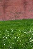 Tegelstenvägg på blommafält Royaltyfri Foto