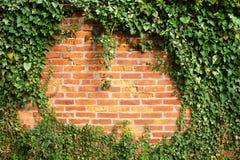 Tegelstenvägg som täckas av murgrönan Royaltyfri Foto