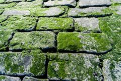 Tegelstenvägg som täckas med grön mossa arkivfoto