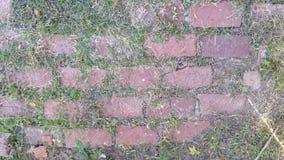 tegelstenwalkway Royaltyfria Bilder