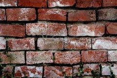 tegelstenyttergammal vägg Arkivbilder