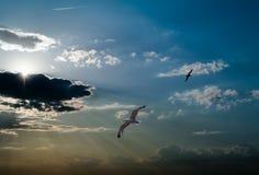 Tegen de achtergrond van een vogel van de dageraadhemel Royalty-vrije Stock Afbeeldingen