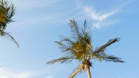 Tegen de blauwe hemel met wolken, in wind ontwikkelen de takken zich van grote palmen, in de hemel een troep van zeemeeuwenvliege stock video