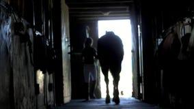 Tegen het licht, de donkere overzichten, silhouetten van het paard en het meisje De jonge jockey loopt met een uit paard stock footage