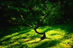 Tegenover elkaar stellend Licht in een Japanse Tuin Stock Fotografie