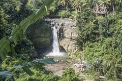 Tegenungan vattenfall, Bali, Indonesien royaltyfria foton