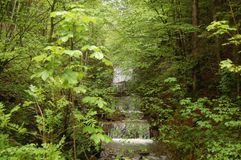 Tegernsee forest waterfall Bavaria Germany Stock Photos