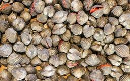 Tegillarcagranosa, Anadara-granosa, bloedkokkel, verse ruwe de zeevruchtenshell van het bloedtweekleppige schelpdier in de markt royalty-vrije stock afbeelding