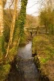 Tehidy国家公园康沃尔郡英国英国 免版税图库摄影