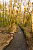Tehidy Country Park Cornwall England UK royalty free stock photo