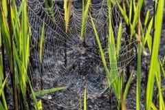Teia de aranha Fotos de Stock