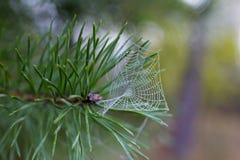Teia de aranha Fotos de Stock Royalty Free