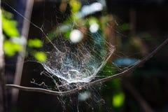 Teia de aranha Fotografia de Stock