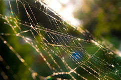 Teia de aranha fotografia de stock royalty free