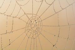 Teia de aranha Imagens de Stock
