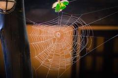 Teia de aranha foto de stock royalty free
