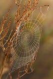 Teia de aranha Imagem de Stock Royalty Free