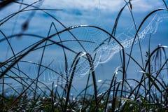 Teia de aranha bonita em gotas de orvalho no nascer do sol imagens de stock