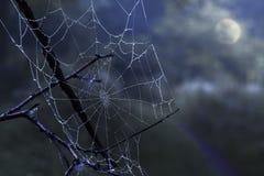 Teia de aranha com gotas de orvalho em um céu noturno escuro, misterioso com um ful fotografia de stock