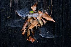 Teia de aranha da aranha com a folha do marrom da queda Imagens de Stock Royalty Free