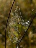 Teia de aranha da aranha com gotas de orvalho fotografia de stock