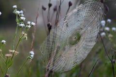 Teia de aranha e aranha Fotos de Stock Royalty Free