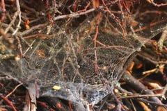 Teia de aranha em varas de madeira Varas empilhadas fotos de stock