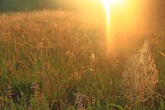 Teia de aranha grande entre as lâminas no campo na luz do sol no alvorecer A Web do ` s da aranha no campo do verão no sol irradi fotos de stock royalty free