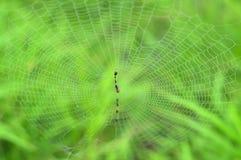 Teia de aranha no fundo verde Imagem de Stock