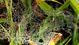 Teias de aranha com as gotas de orvalho suspendidas fotos de stock royalty free