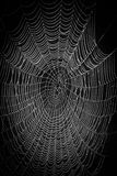 Teias de aranha em um fundo natural imagem de stock