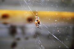 Teias de aranha de tecelagem Fotografia de Stock Royalty Free