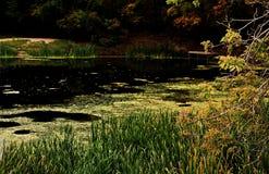 Teich überwältigt mit Entengrütze Lizenzfreies Stockfoto
